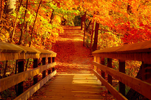 Autumn Bridge, Vermont