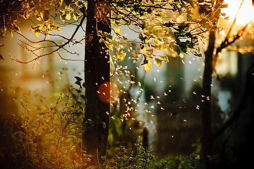 Magical Tree, Lithuania