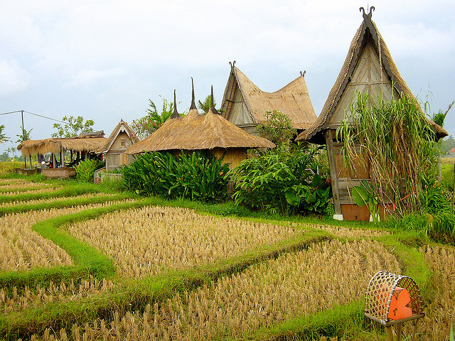 by I Prahin on Flickr.Rice fields at Desa Seni Resort, Canngu Bali. Near Seminyak, Indonesia.
