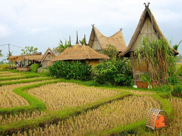 by I Prahin on Flickr.Rice fields at Desa Seni Resort, Canngu Bali. Near Seminyak, Indonesia.