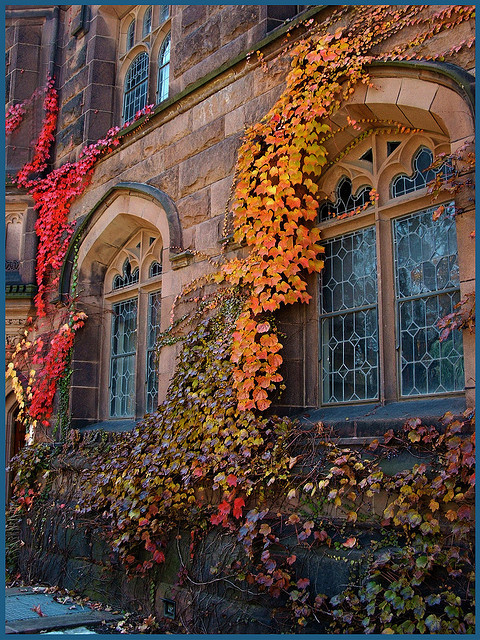 Ivy Windows, Princeton, New Jersey