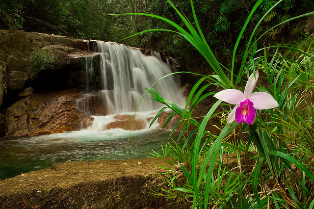 by hjxkarim on Flickr.Chemerong Waterfall and a bamboo orchid in Sarawak, Malaysia.