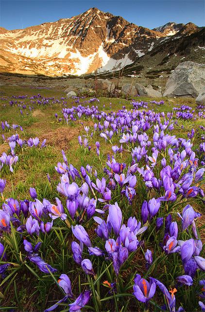 Spring time in Rila Mountains, Bulgaria