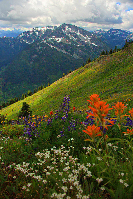 A beautiful flower filled meadow near North Bend, British Columbia, Canada