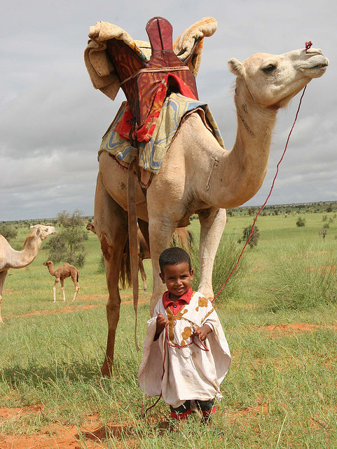 Future Camelmaster in Mauritania, West Africa