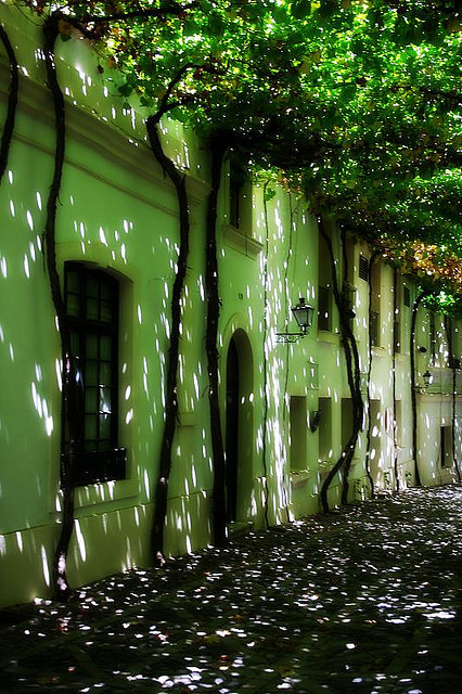 Calle emparrada in Jerez de la Frontera, Andalusia, Spain