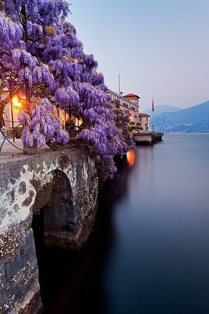 Wisteria, Lake Como, Italy
