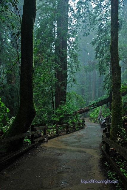 Fallen Redwood, Muir Woods, San Francisco