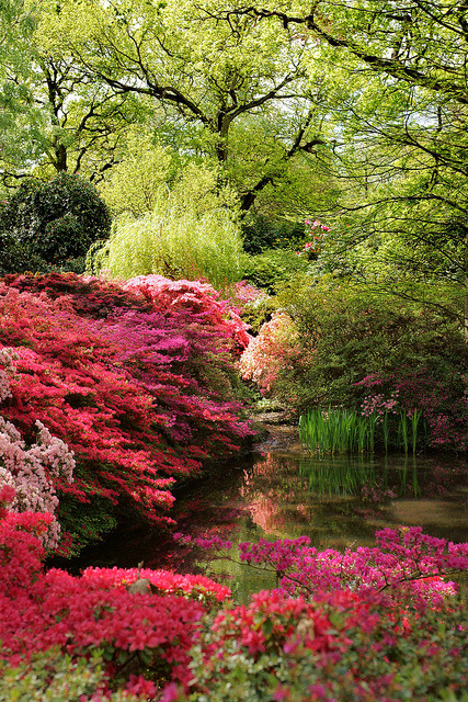 Isabella Plantation in Richmond Park, south-west London, England