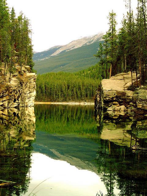 Shades of Green,  Banff National Park, Alberta, Canada