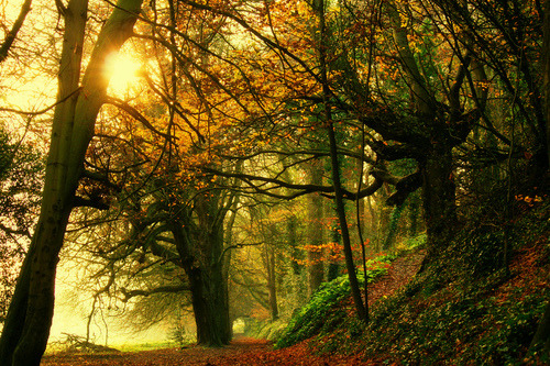 Forest Path, Dublin, Ireland