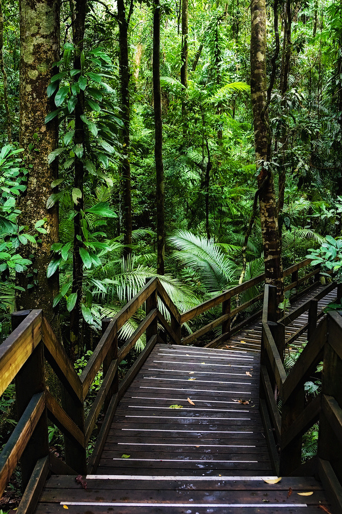 Wooden trail in Daintree Rainforest, one of the oldest surviving forests in the world, Australia