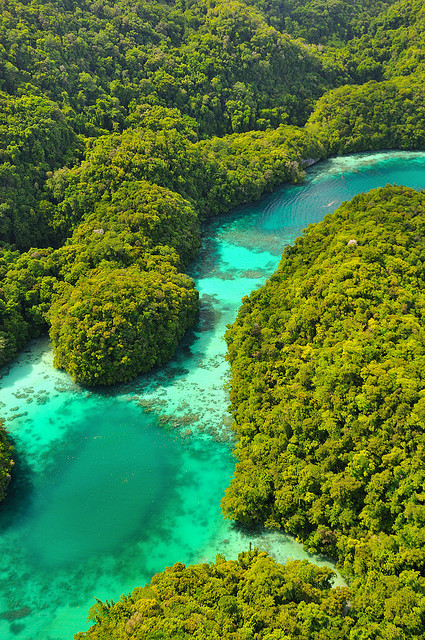 Turquoise colored water of the Milky Way Cove in Rock Islands / Palau