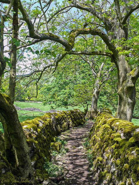 Track near Starbotton, Yorkshire Dales / England