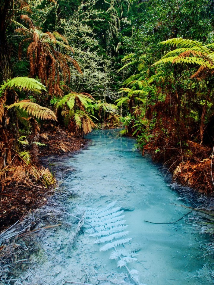 Clear thermal stream in Whakarewarewa Redwoods Forest, Rotorua / New Zealand