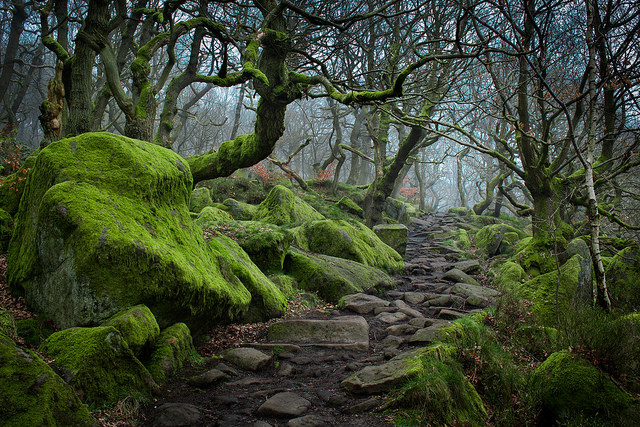Forest path to Padley Gorge, Peak District / UK