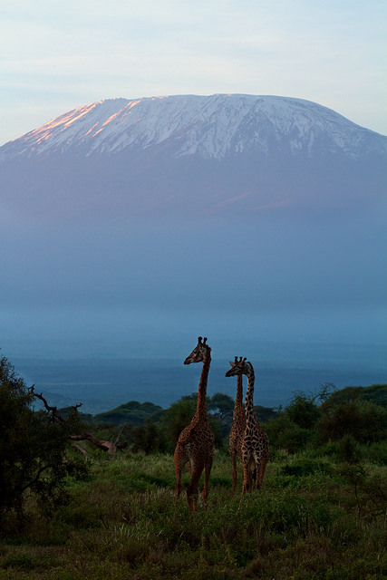 Amboseli National Park and Mount Kilimanjaro / Kenya